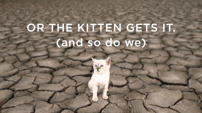 Kittens: The New Mascot Of Global Warming