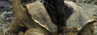 Rare Tortoise Discovered In Ukraine! Obama Declares War!
