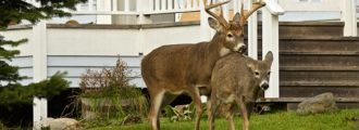 NYC Mayor DeBlasio Wants $2 Million For Deer Vasectomies