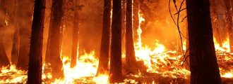 Who's to Blame for California Wildfires? Politiciansand Radical Environmentalists